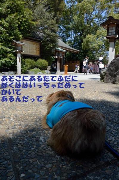 20120408_11402871jpg_2